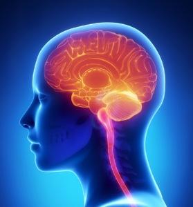 the-brain